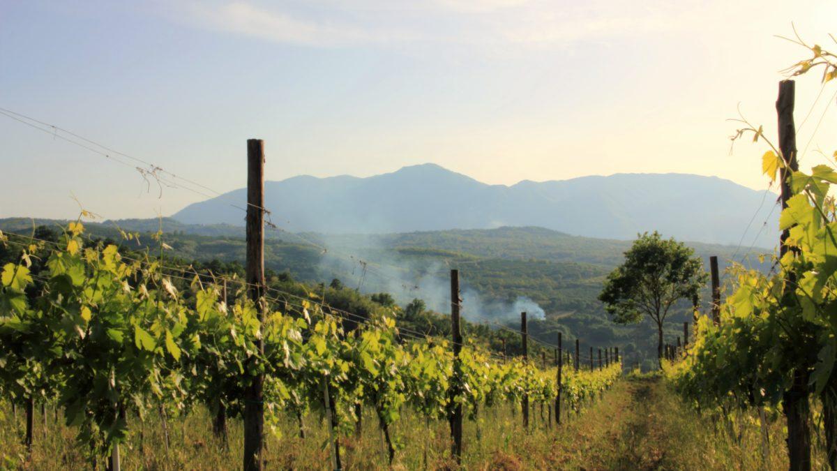 view of Ortale Vineyard