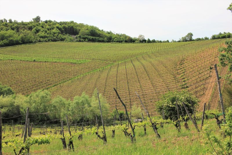 Vineyard Colle Serrone, Tufo
